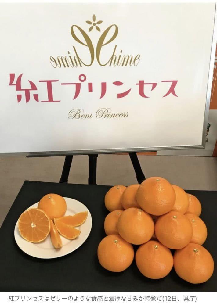 """又出柑橘新品种,日本柑橘品种""""红公主""""究竟是什么? 其他柑橘新品种 第2张"""